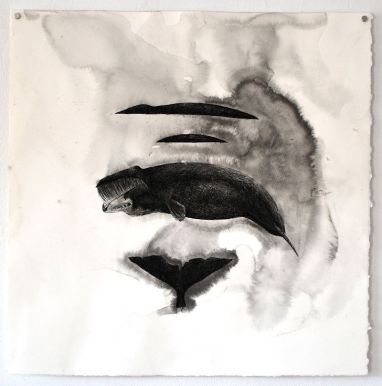 "Balaena Mysticetus (Bowhead Whale), 15"" x 15"", ink and sea water on paper, 2016 (sold)"