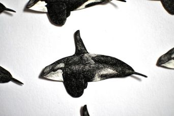 Southern Resident Killer Whales, ink on paper