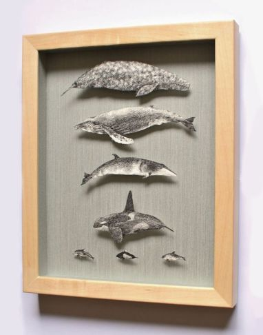 Common Cetaceans of Vancouver Island, ink on paper and metal pins in shadowbox