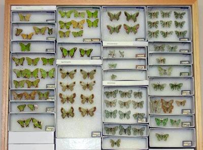 greenbutterflies