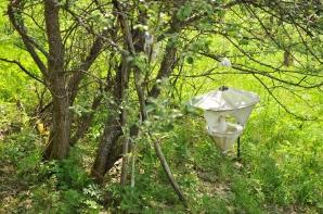 Scientific bug collection trap