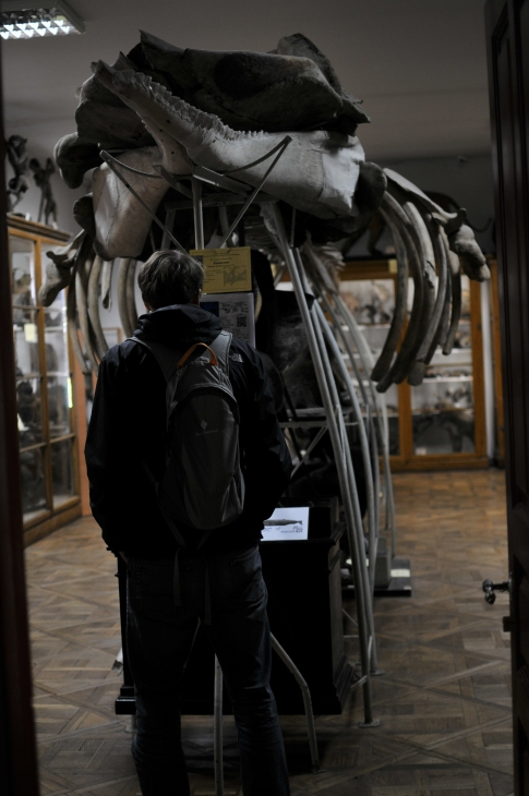 Sperm Whale Skeleton, Zoological Museum, Lviv