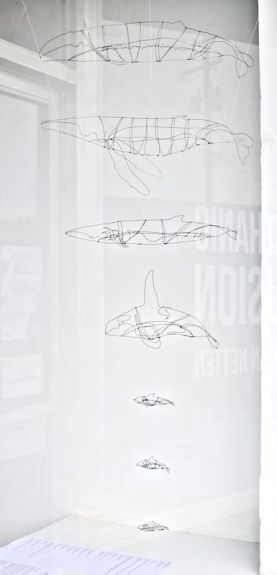 Common Cetaceans of Southern Vancouver Island 1:24 Scale (3D drawing with wire)