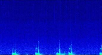 humpback whale calls (onc)