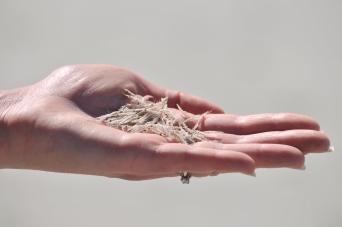Handful of kril