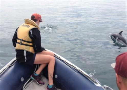 KORI cetacean survey (photo credit: Jody Weir)