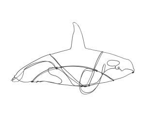 Orca (1)
