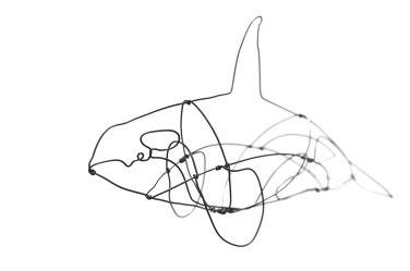 Orca (3)