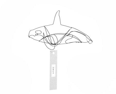 Orca (5)