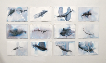Iceland Whale Series ink and seawater on paper 9 drawings each 7.5x11 2020