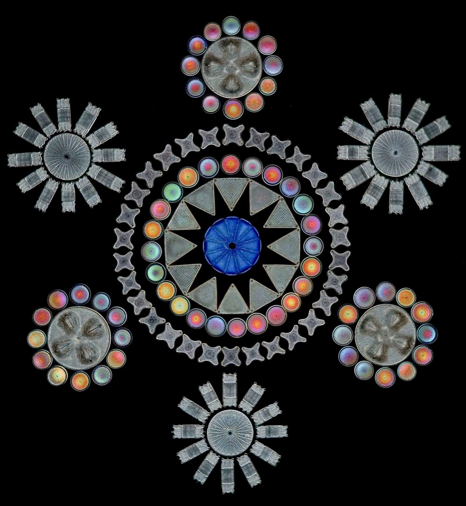 Work by German microscopist J.D. Möller